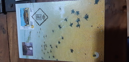 2 FDC COVERS FROM INDIA TURTLE TORTUE TORTUGA SCHILDKRöT TARTARUGA MARINE LIFE MAXIMUM CARDS - Tortues
