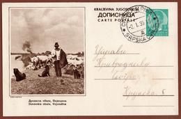 YUGOSLAVIA-SERBIA, VOJVODINA, 5th EDITION ILLUSTRATED POSTAL CARD - Ganzsachen
