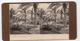 8 - NICE - Jardins Du Casino - Stereoscoop