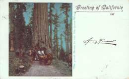 Greetings Of California - The Great Boom In The Mariposa-Wood 1899 AKS - Gruss Aus.../ Grüsse Aus...