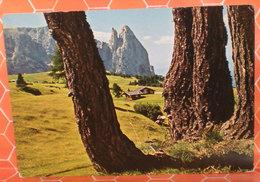 Altopiano Dello Sciliar Dolomiti Particolare Alberi (Bolzano) Cartolina Viaggiata 1982 - Italia