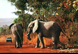 """Togo - Dapaong : Eléphants à La """"fosse Aux Lions"""" - Éléphants"""