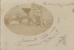 Photographie - Carte-Photo - Chien De Chasse Braques - Toulouse 31 - Oblitérations 1902 Toulouse Marvejols - Fotografía