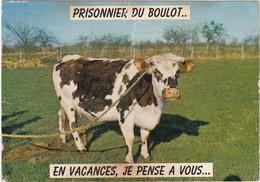 """D1417 CARTE HUMOUR - VACHE DANS UN PRE - """"PRISONNIER DU BOULOT... EN VACANCES, JE PENSE A VOUS..."""" - Humour"""