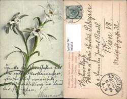 596854,Edelweiß Alpenflora Blumen - Ohne Zuordnung
