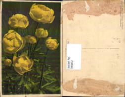 596852,Trollblume Blumen Pub Gyger Adelboden - Ohne Zuordnung