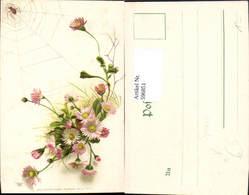 596851,Gänseblümchen M. Spinne Spinnennetz Netz Tiere Blumen Pub Edgar Schmidt 7012 - Botanik