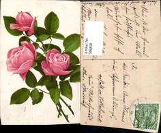 596850,Rosa Rosen Blüten Knospen Blumen - Ohne Zuordnung