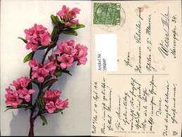 596847,Blütenzweig Alpenrose Oder Azalee Blumen - Botanik