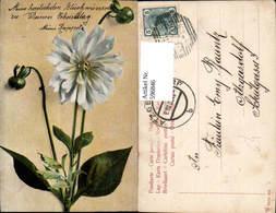596846,Weiße Aster Chrysantheme Blumen - Botanik