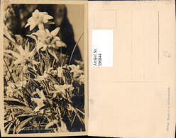 596844,Foto Ak Edelweiß Alpenflora Blumen - Ohne Zuordnung