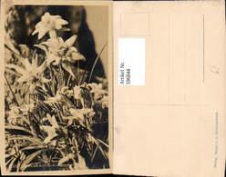 596844,Foto Ak Edelweiß Alpenflora Blumen - Botanik