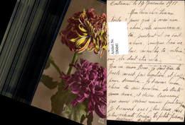 596841,Chrysanthemen Blumen Pub DIX 1233/3 - Ohne Zuordnung