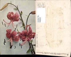596834,Tiger-Lilie Lilie Blumen - Ohne Zuordnung