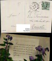 596830,Katzenminze Blaue Blumen Blüten Blumen Text - Ohne Zuordnung