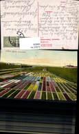 596826,Groeten Uit Het Bollenland Niederlande Blumenfeld Blumen Eisenbahn Zug Lok - Botanik