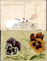 596825,Stiefmütterchen Blumen - Botanik