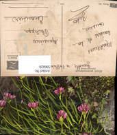 596820,Alpenschnittlauch Alpenflora Blumen - Botanik