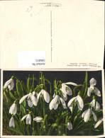 596815,Schneeglöcklein Schneeglöckchen Blumen Pub Gyger Adelboden - Ohne Zuordnung