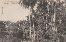 KONAKRY   GUINEE FRANCAISE    Forêt  De Toumbo - Guinée Française