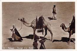 Asie SYRIE Syria PALMYRA Passage D'un Chamelier (Palmyre Chameau Camel)(Edition Photo SPORT Beyrouth)*PRIX FIXE - Syrie