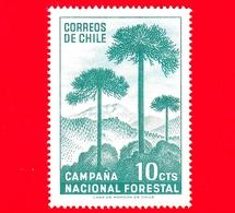Nuovo - CILE - 1967 - Campagna Di Riforestazione - Alberi - Foreste - Araucaria - 10 - Cile