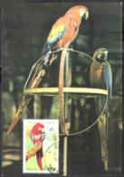 2864  Parrots - Perroquets - Maximum Card - Cb . 2,75 - Parrots
