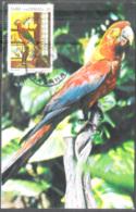 2864  Parrots - Perroquets - Maximum Card - Cb . 2,85 - Parrots
