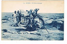 CPA.Afrique. Sahara. Un Puits Au Pâturage  (F.165) - Sahara Occidental