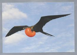 NL.- Fregatvogel. Frigatebird, Fregate Magnificens. Met Postzegel Opdruk Frigatebird Curacao 225c. Ongelopen. - Vogels