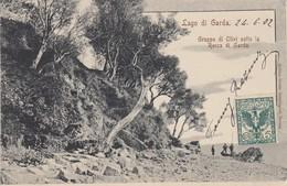 GARDA-VERONA-LAGO DIO GARDA-GRUPPO DI OLIVI SOTTO LA ROCCA--CARTOLINA VIAGGIATA IL 24-6-1902 - Verona