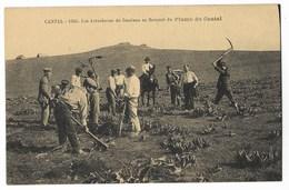 CPA 15 CANTAL Les Arracheurs De Gentiane Au Sommet Du Plomb Du Cantal - France