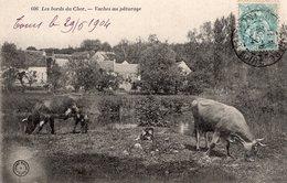 2351 - Les Bords Du Cher - Vaches Aux Pâturage - France