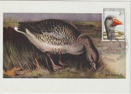 Belgique Carte Maximum 1972 Oiseaux Oie 1644 - 1971-1980