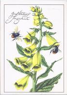 AK-88073-32   -  Großblütiger Fingerhut - Blumen