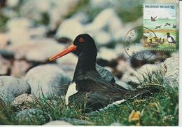 Belgique Carte Maximum 1988 Oiseaux De Mer 2276 - Cartes-maximum (CM)
