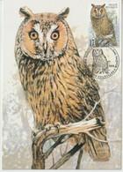 Belgique Carte Maximum 1999 Oiseaux Hibou 2808 - Maximumkarten (MC)