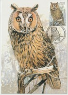 Belgique Carte Maximum 1999 Oiseaux Hibou 2808 - Maximum Cards