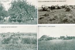 Canada. Immigration. 4 CP. Mr Paul Wiallard, Sur Cartes Culture Fruits, Blé, Grain, Lieuses. Scan Du Verso. - Cultures