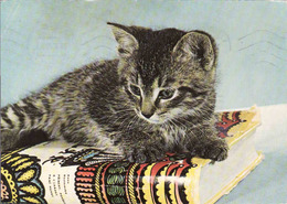 Cat, Katze, Chat, Gato,used, - Gatos