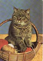 Cat, Katze, Chat, Gato,used, - Chats