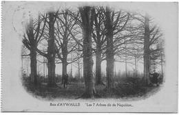 AYWAILLE : Les 7 Arbres De Napoléon (petite Animation) - Aywaille