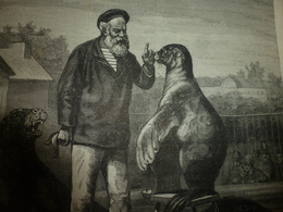 1886: Les Gravures  De ----> Les Animaux Polaires ( PHOQUES, OURS ; Etc - Collections