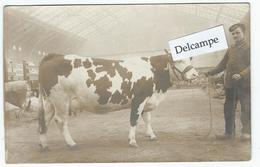 PARIS - Concours Agricole, Présentation D'une Vache - Carte-photo - Foires