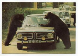 THOIRY--1975--Ours En Liberté Dans La Réserve Africaine (animée,voiture BMW 2002 TI)--timbre--cachet....à Saisir - Thoiry