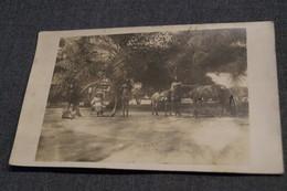 Ancienne Photo Originale,défense D'éléphant,animé,époque Congo Belge 1930,Afrique,RARE Photo Format Carte Postale - Photos