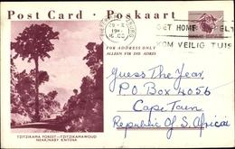 Entier Postal Cp Südafrika, Tzitzikama Wald, Straßenpartie - Südafrika