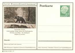 5219  Ours Brun, Zoo Dortmund: Entier (c.p.) D'Allemagne, 1957 -  Brown Bear  Stationery Postcard From Germany - Bären