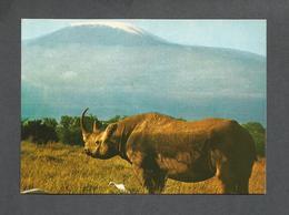 ANIMAUX - ANIMALS - RHINOCEROS - KILIMANJARO IN THE BACKGROUND - ÉDITION EAST AFRICA - Rhinocéros