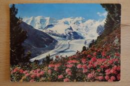 Alpenrosenfeld Beim Montafonergletscher Mit Piz Palü Und Bellavista - Schweiz